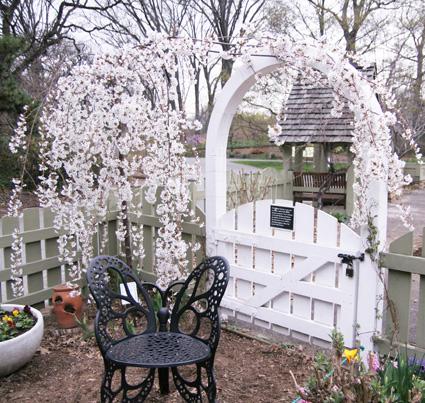 Cherry Blossoms in the Children's Garden, Brooklyn Botanic Garden