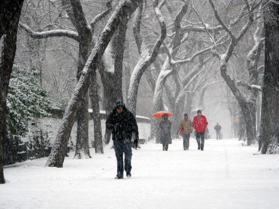 Central Park © Lia Chang