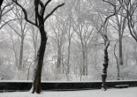 Snow in New York's Central Park © Lia Chang