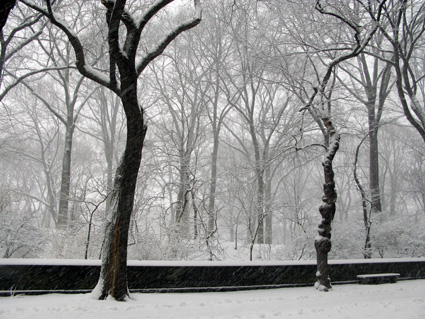 Snow in New York City's Central Park © Lia Chang