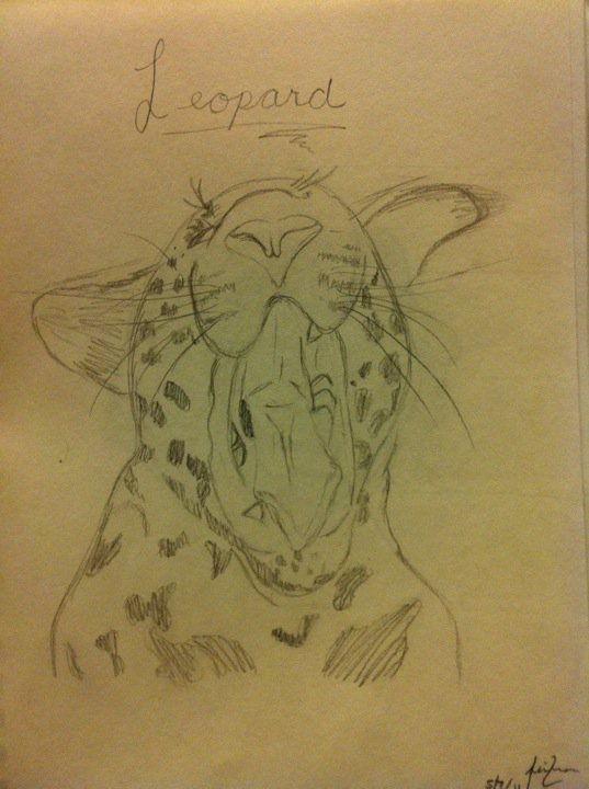 By Asia Flores, Yawning Leopard, Medium: graphite, 2011.  Photo by Marissa Chang-Flores.