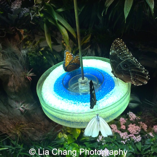 The Butterfly Conservatory at the American Museum of Natural History in New York. Photo by Lia Chang