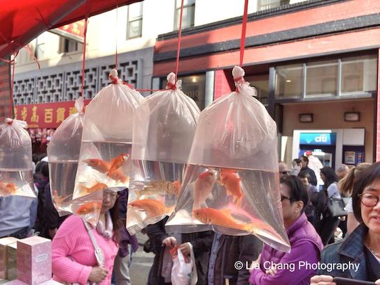 The goldfish symbolizes abundance of gold. Photo by Lia Chang